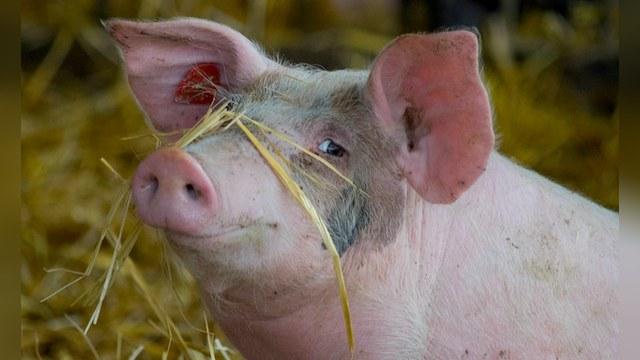 Gazeta Wyborcza: Россия «по-свински» расколола Европу