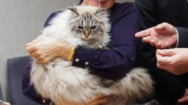 Кот путина подарок