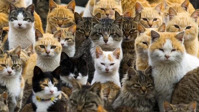 Weather Network: Австралия признала кошек вредителями и объявила им войну
