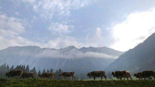 DWN: Из-за санкций Кремля немецкие фермеры теряют по миллиарду в год