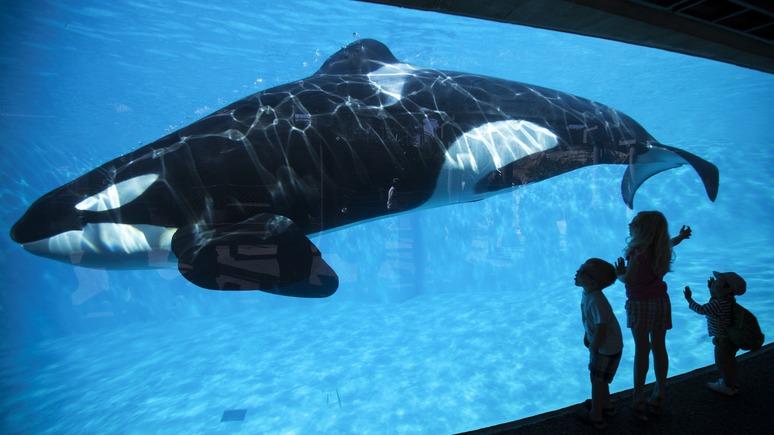 Bloomberg: «Синий кит» — это не только российская проблема