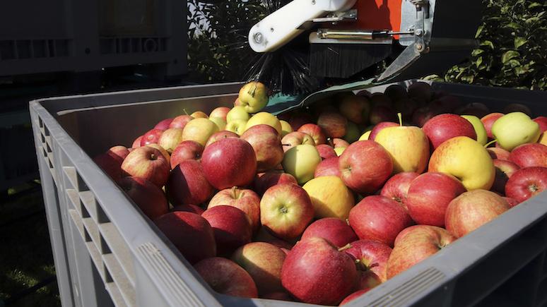 Россельхознадзор запретил ввоз яблок с31 белорусского предприятия