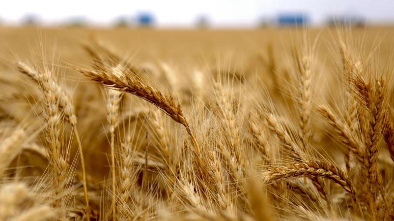 Bloomberg: российская «пшеничная лавина» доставит хлопот европейским конкурентам