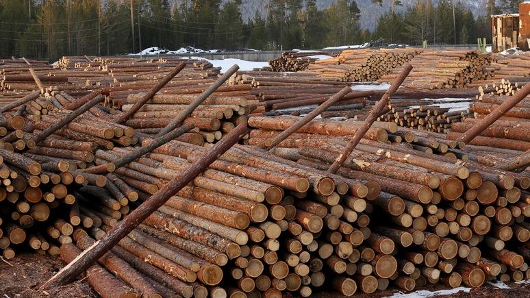 NYT: вырубка сибирских лесов Китаем беспокоит местных жителей